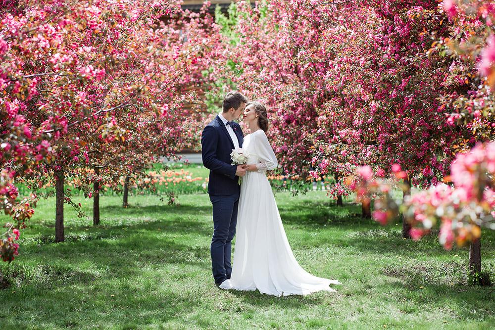 жених и невеста розовые яблони Коломенское